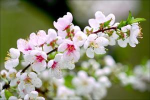 Sự tích mùa xuân