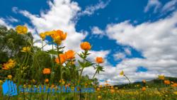 Phân tích khổ thơ 4 và 5 của bài thơ Mùa xuân nho nhỏ